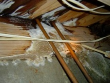 Moisture Management: Mold From Plumbing Leak, Indoor Air Quality, Asthma