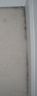 Infiltration Carpet Discolored At Baseboard