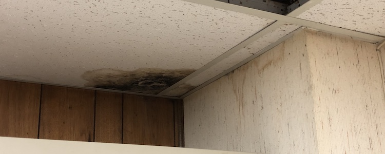 Water-damage-basement-ceiling-tile