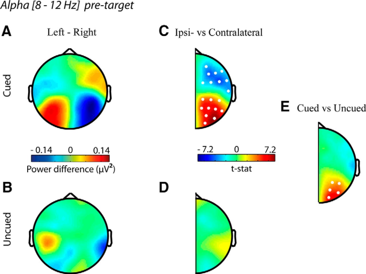 The Role Of Alpha Activity In Spatial And Feature Based Attention