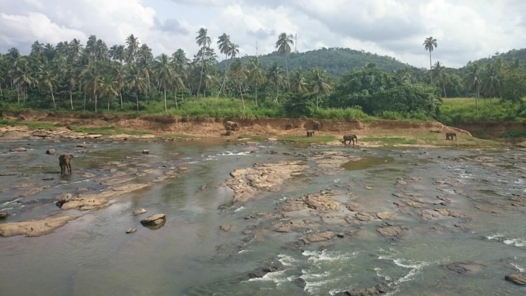 Pinnawala_Elephant_Orphanage_6