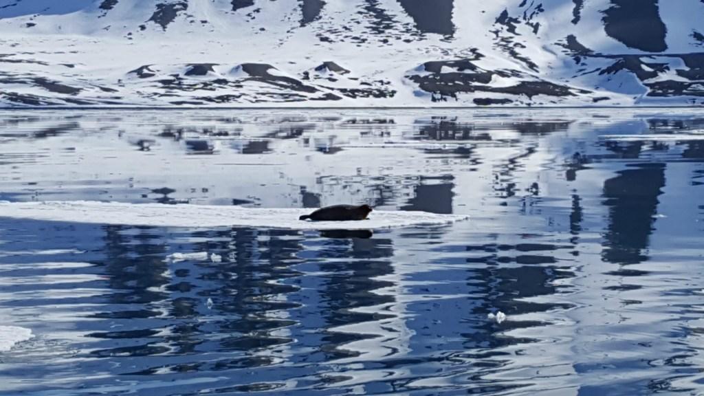 Sejltur_Svalbard_sael