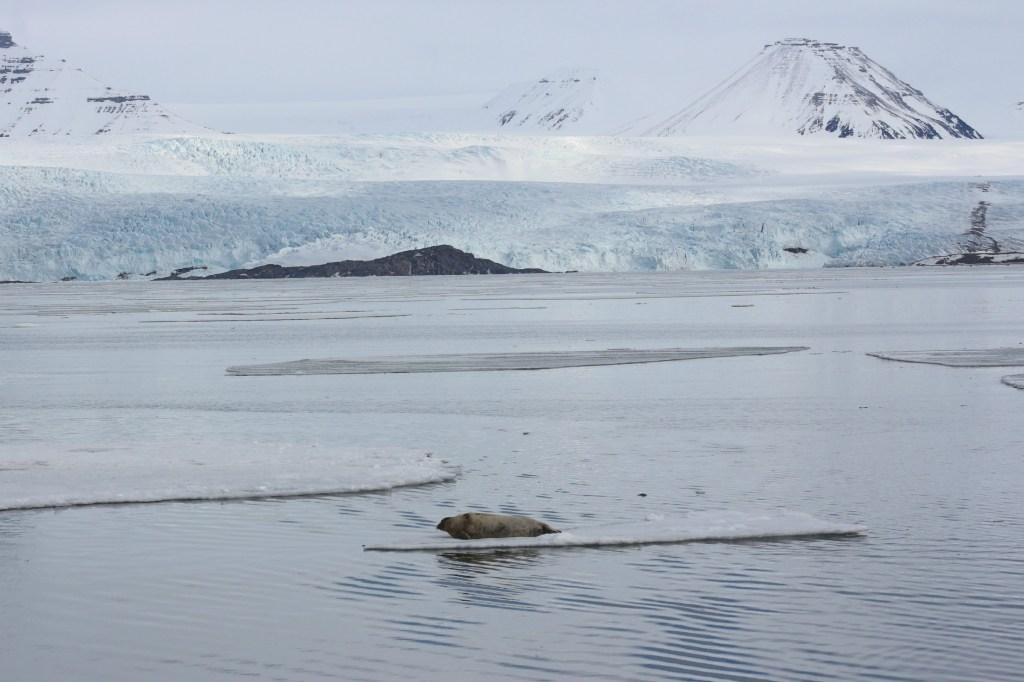 Sejltur_Svalbard_sael_pyramiden2