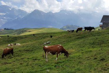 Schweiz_1