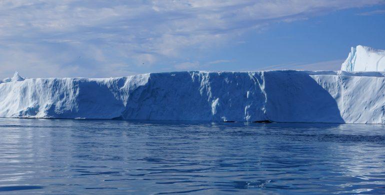 Ilulissat Isfjord Hval