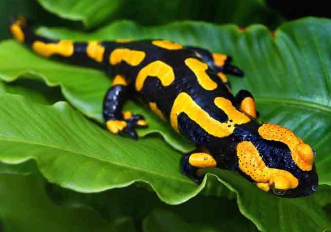 reserve-naturelle-bruges-parc-ornithologique-bordeaux-amphibien