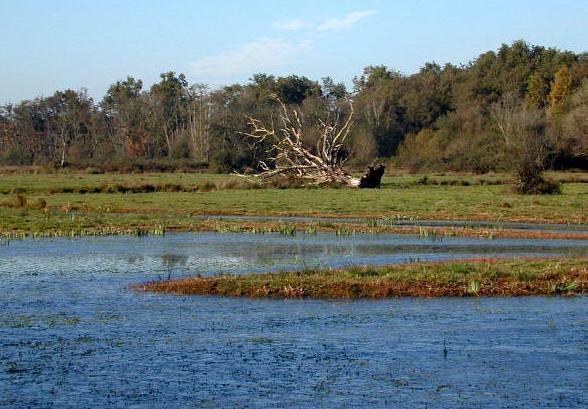 reserve-naturelle-bruges-parc-ornithologique-bordeaux