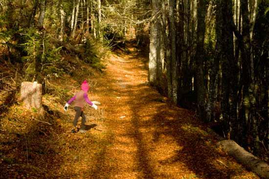 vercors-avec-enfant-forêt