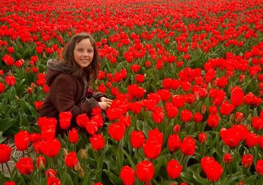 champ-de-tulipes-et-enfant-hollande
