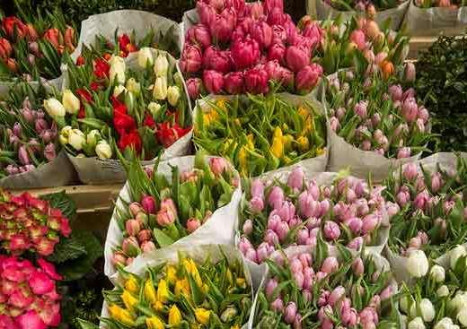 marché-aux-fleurs-amsterdam