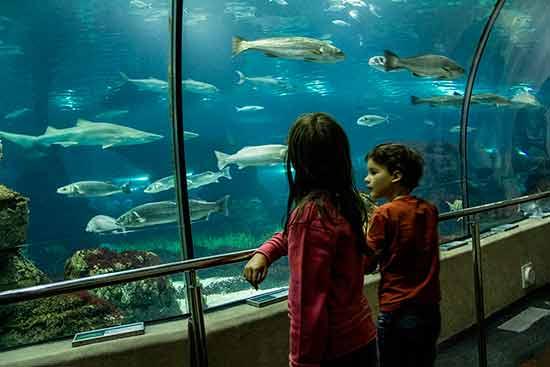 enfants-aquarium-barcelone