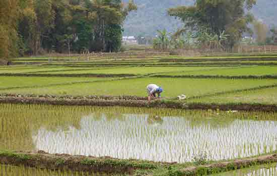rizière-vietnam