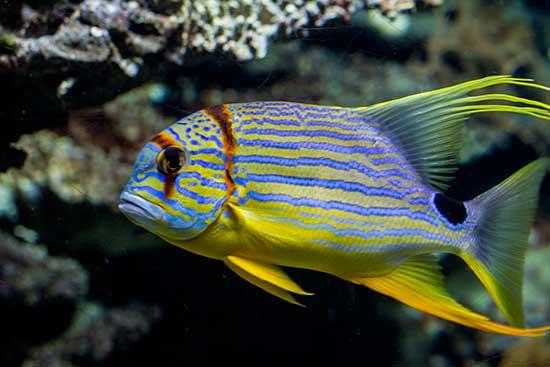 Aquarium-barcelone-poisson-coloré