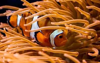 poisson-clown-oceanorium-lisbonne
