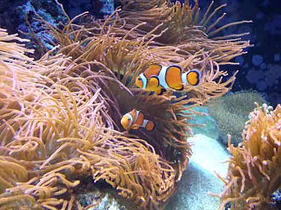 poissons-dans-aquarium-de-lisbonne portugal
