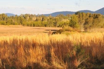 australie-brousse-dorée vers-mial-lakes