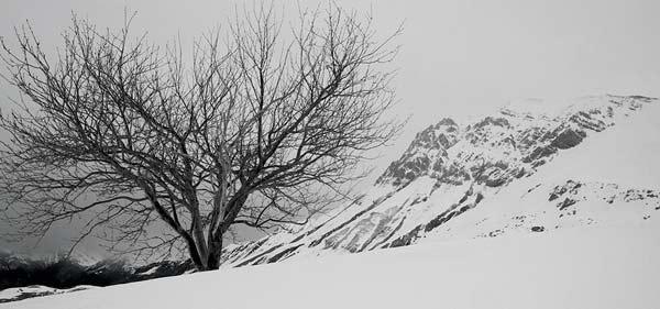 montagne-savoie-sous-neige-avec-arbre