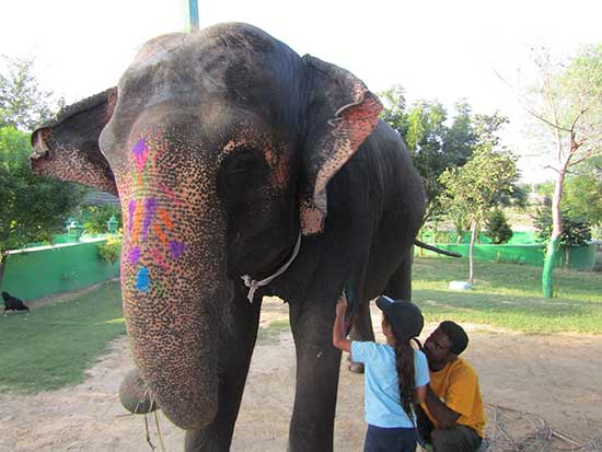 elephant-en-inde-avec-enfants