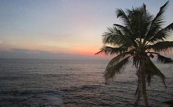 plage- et cocotier en-inde