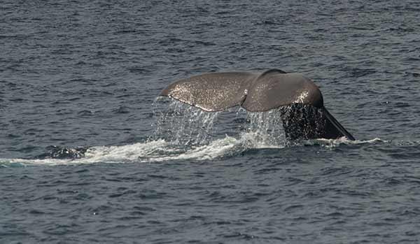 Tarifa-et-baleines-Andalousie-Espagne