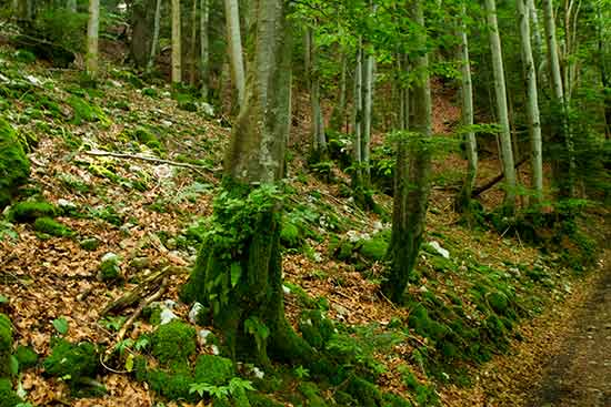 randonnée-grand-manti-chartreuse