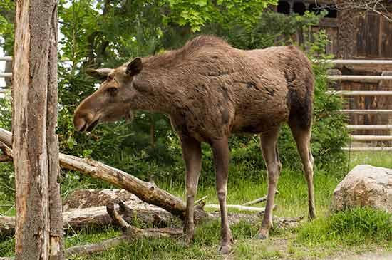 visiter-stockholm-avec-des-enfants-zoo