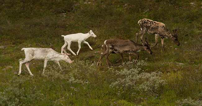 visiter-la-suede-en-camping-car-rennes