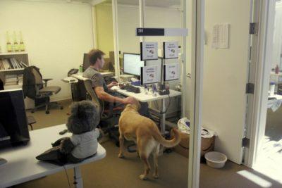 إصطحاب الكلاب داخل مقر العمل