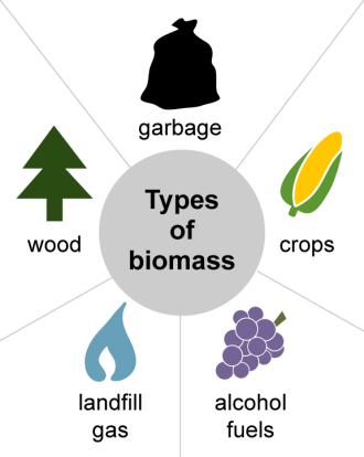 Biomass energy is energy generated or produced by living or once-living organisms.