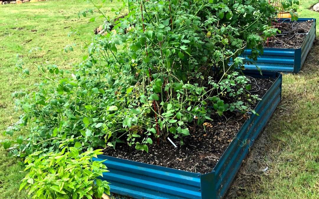 Indoor Herb Garden Guide (guest post from ProFlowers) & my garden update