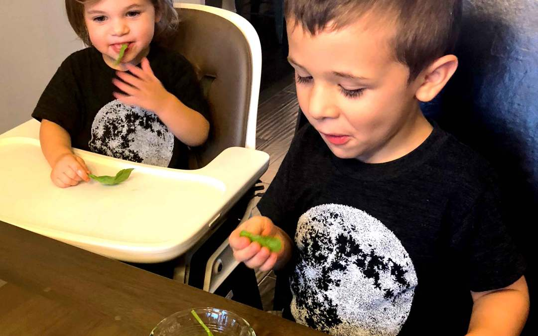 Exploring the Five Senses for Babies, Toddlers, and Preschoolers: Sense of Taste
