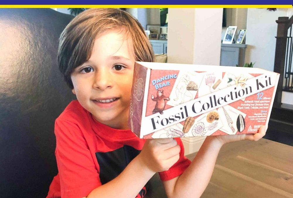 Dancing Bear Fossil Collection Kit   STEAM Toy Review