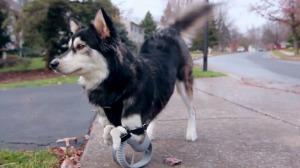 Derby the dog - er rennt wieder, dank 3D Systems-Technologie (Bild: 3D Systems).