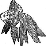 goldfish englisch lernen in dresden neustadt