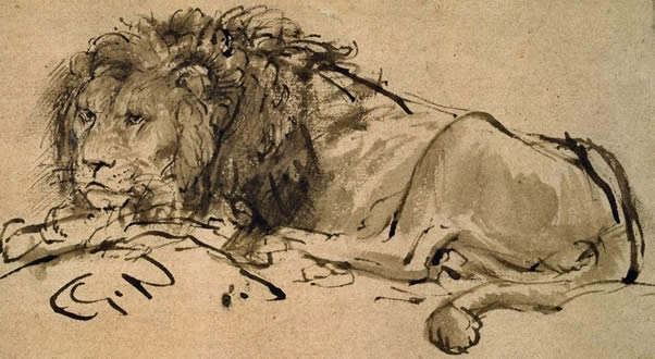 Lion painted by Rembrandt