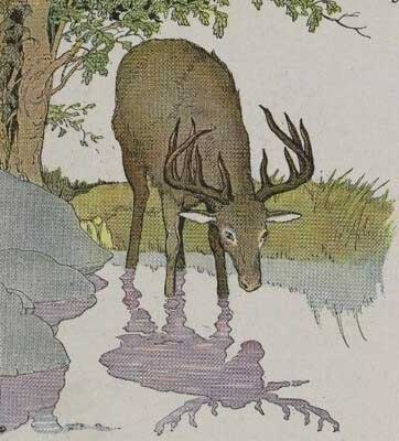 The Vain Stag Moral Story in English for Student & Kids
