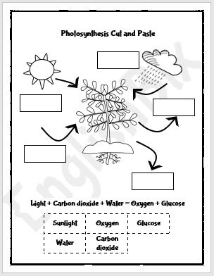 [Get 31+] Get Photosynthesis Worksheet For Kids Png GIF