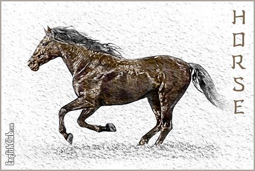 Horse - Chinese Zodiac Animal