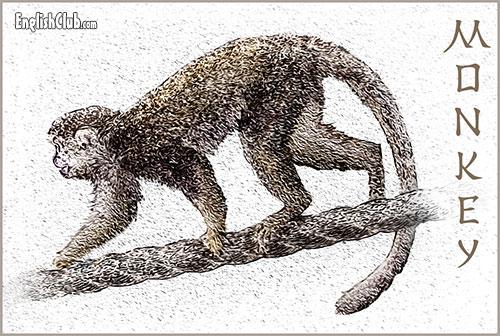 Monkey - Chinese Zodiac Animal
