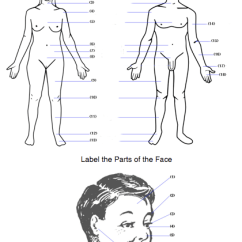 Diagram Of Human Ear With Labelling Gas Steam Boiler Wiring Body Worksheet: Label & Face Parts (english/esl/efl)