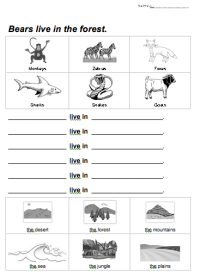 Bears live in the forest: Animal Habitats Worksheet