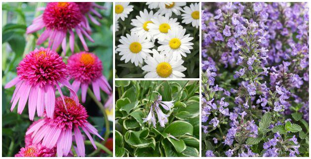 Top 10 Low Maintenance Perennials English Gardens
