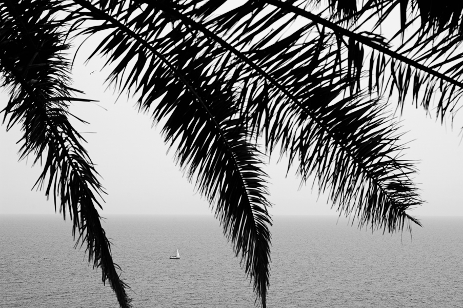 English Photographer Composition Photo_Palm_Trees_Monochrome_