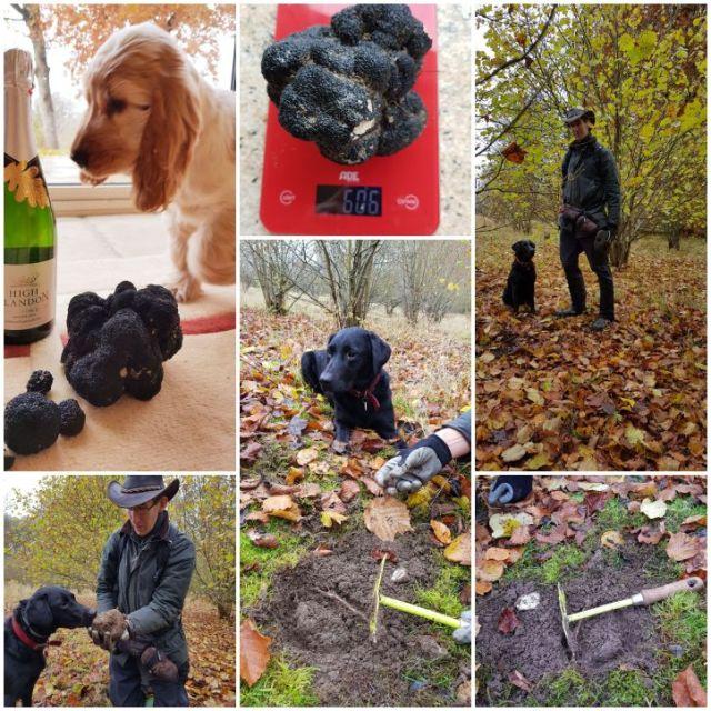 606g monster Black Autumn truffle