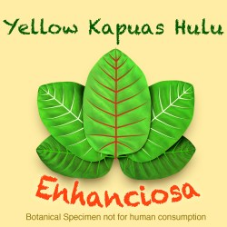 yellow vein hulu kapuas kratom powder mitragyna speciosa