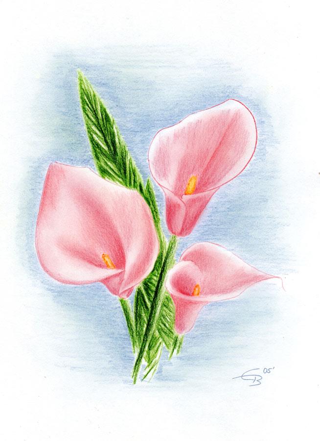 Callas Blumen Bilder painting of callas quadri