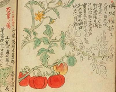 Botanical Puzzle