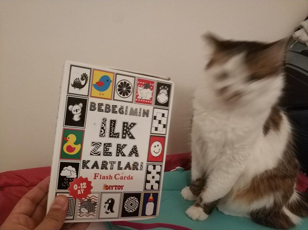 ilk eğitici kitap