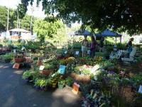 Tropical Garden Spectacular