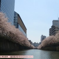 (3月-4月)さくらクルーズ/SAKURA CRUISE